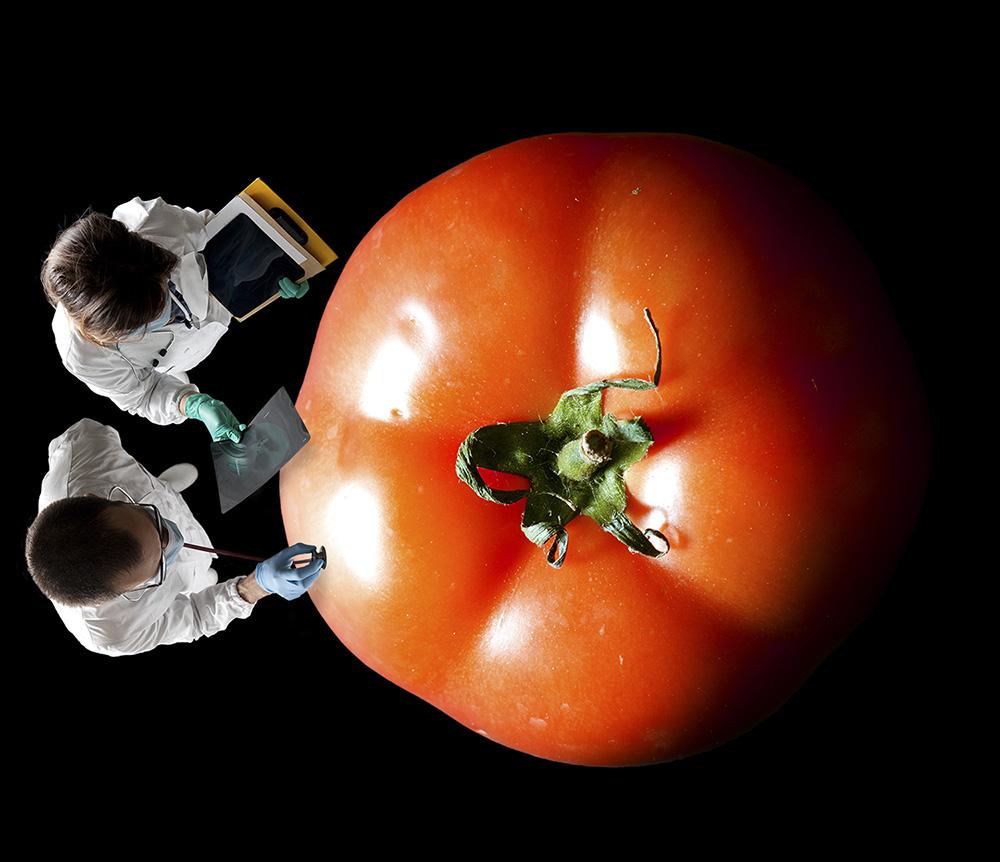 emblemata studio zoo doctors tomato